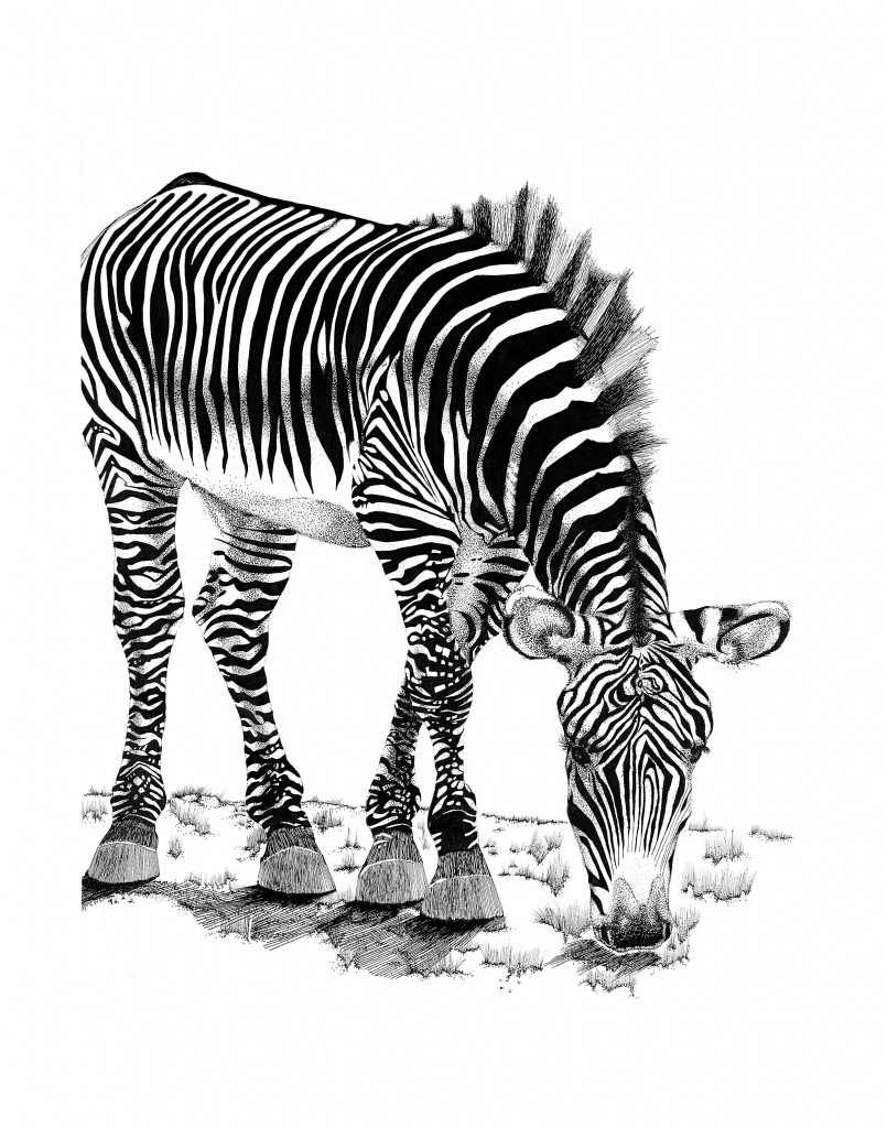 Randy the Zebra is the property of Mark W. Slater www.naturallinestudio.com